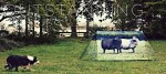 animal-farm-2_1c3f448830d101b2ab73768b4dc02210